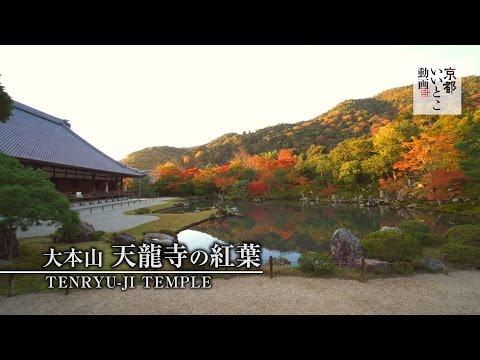 大本山 天龍寺の紅葉 / Tenryu-ji Temple / 京都いいとこ動画