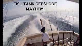 FISH TANK LOS SUENOS OFFSHORE FRENZY | Billfish Movement TV 037