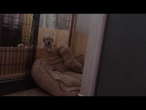 Puppy Escapes Box