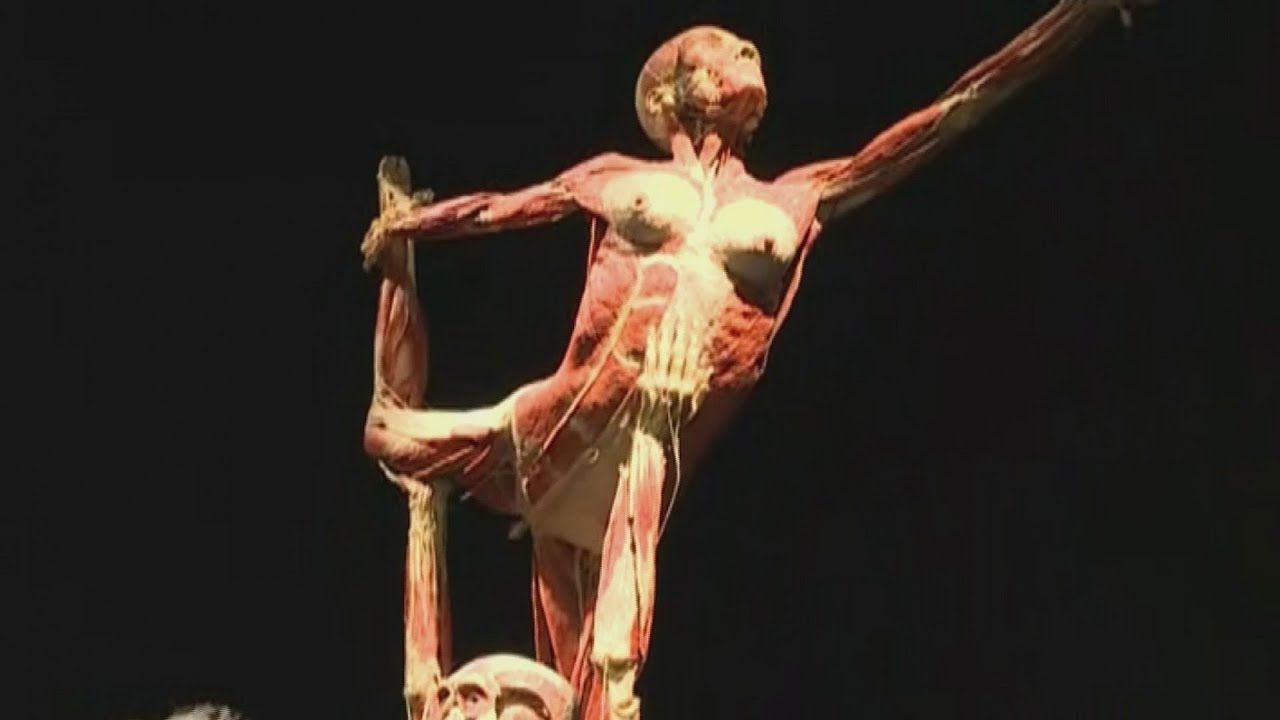 Omsi S Newest Body Worlds Exhibit Youtube