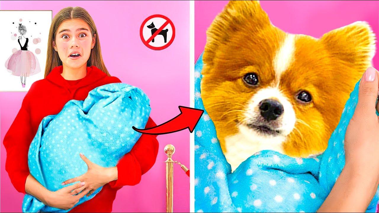 Stacy quiere llevar al perro a la tienda.  Stacy y el perro
