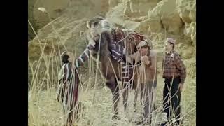 Ложи верблюда. Джентльмены удачи