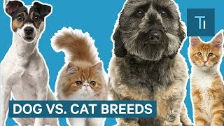 Why Dog Breeds Look So Different But Cats Don't