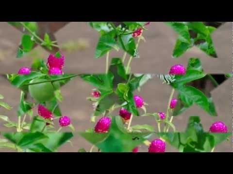 Jack Parnell (United Kingdom) - The Lotus Eaters