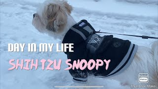 A Day in My Life   Shih Tzu puppy (snoopy) Daily Routine!! BFF
