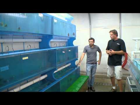 Marine life at Segrest Farms with BZTV presented by HIKARI