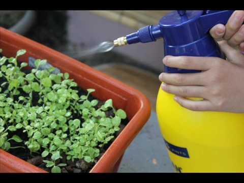И в саду, и в огороде - 20.03.17 Борьба с вредителями. Специалист Елена Ермолаева