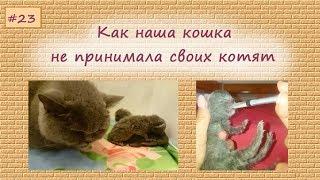 Кошка не принимает своих котят - история с хэппиэндом
