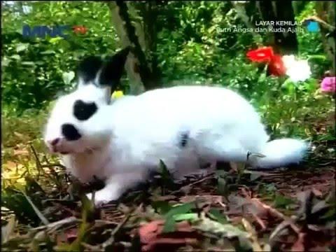 Film TV MNCTV Terbaru Putri Angsa Dan Kuda Ajaib