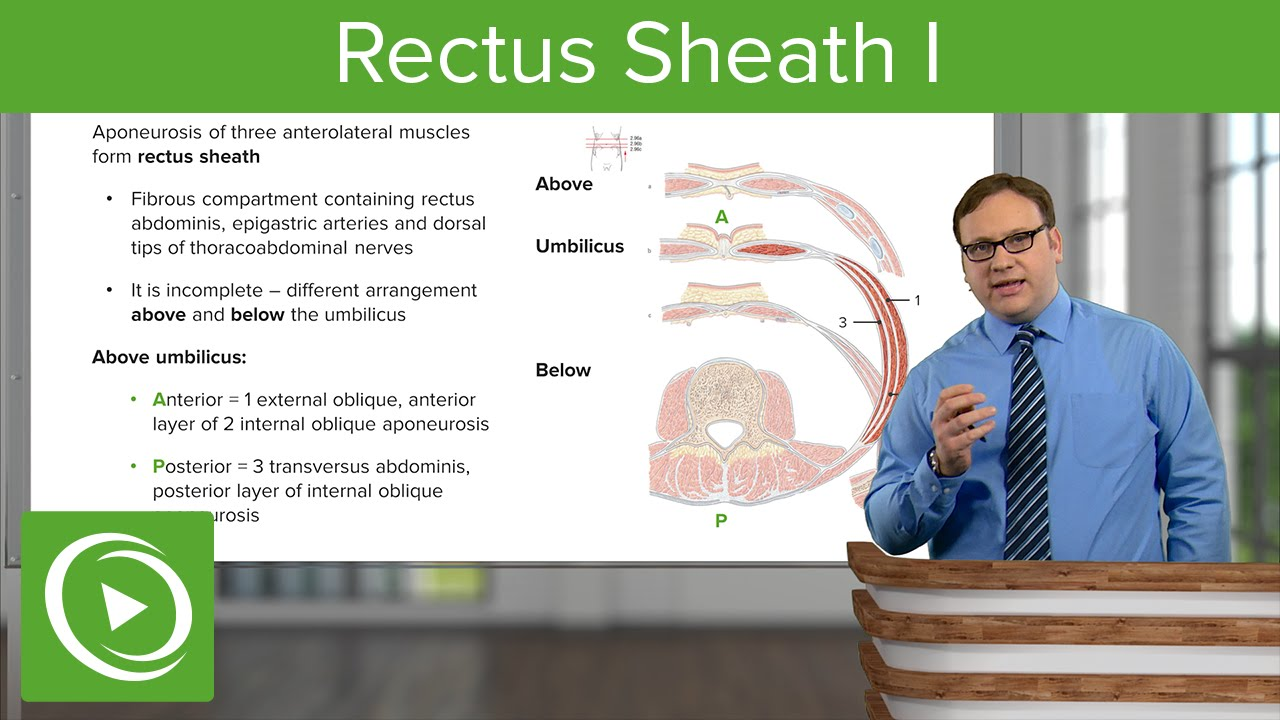 Rectus Sheath I – Anatomy | Lecturio