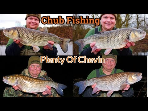 Chub Fishing Small Rivers - Definitive Rove (Video 133)