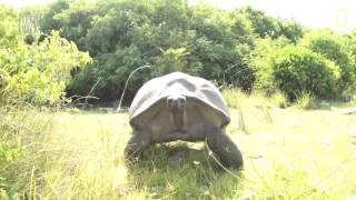 نتیجه مزاحمت در خلوت یک زوج لاکپشت TechPack E03S01