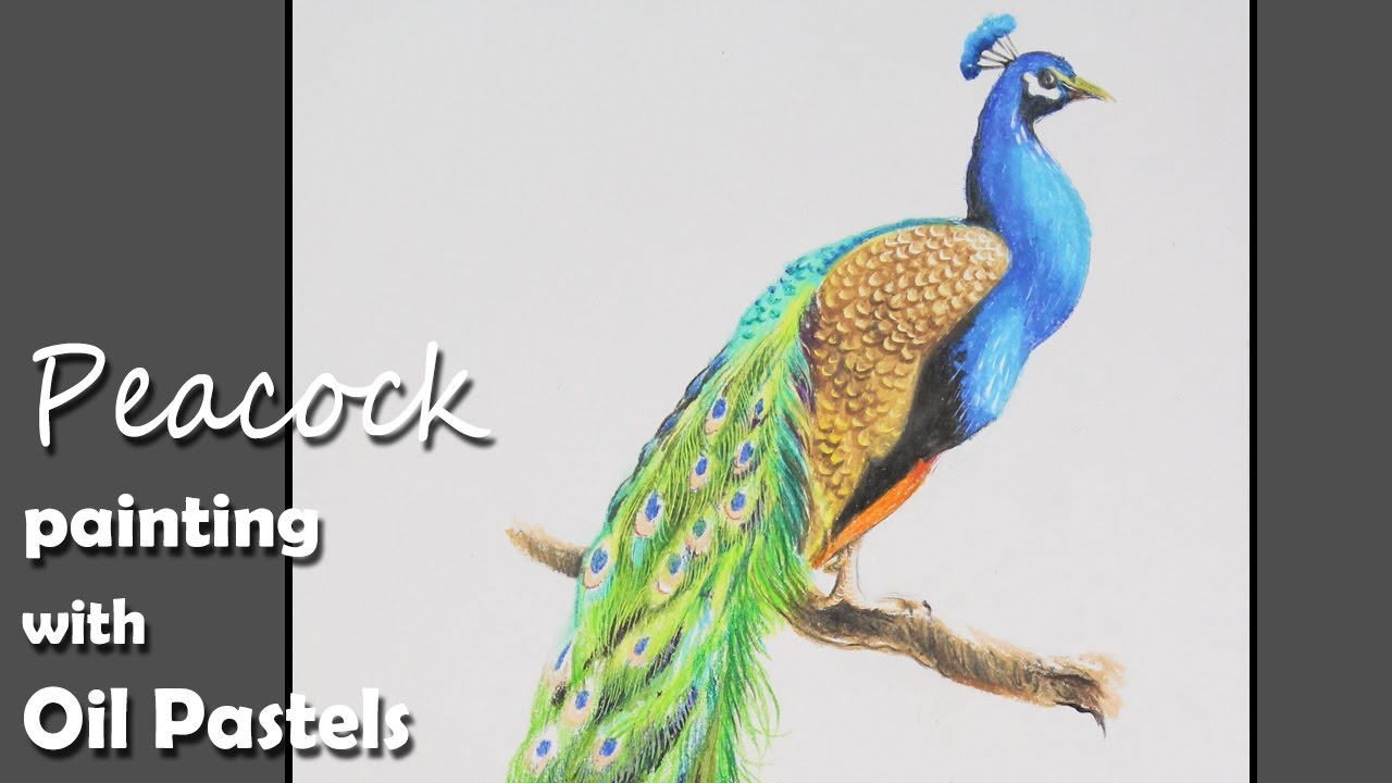 How To Paint A Peacock With Oil Pastels  Step By Step