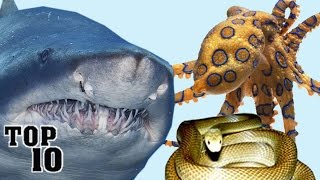 Top 10 Most Deadly Animals In Australia