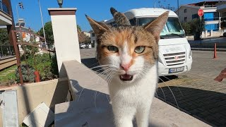 Calico cat started meowing as soon as she saw me