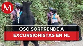 Oso sorprende a jóvenes en Chipinque, Nuevo León