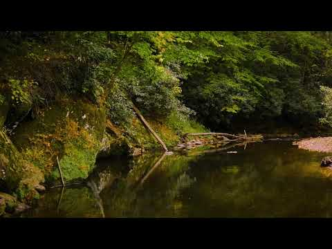 Relaxing Animated Background Image | Slow moving trout stream - Compositing with premiere pro