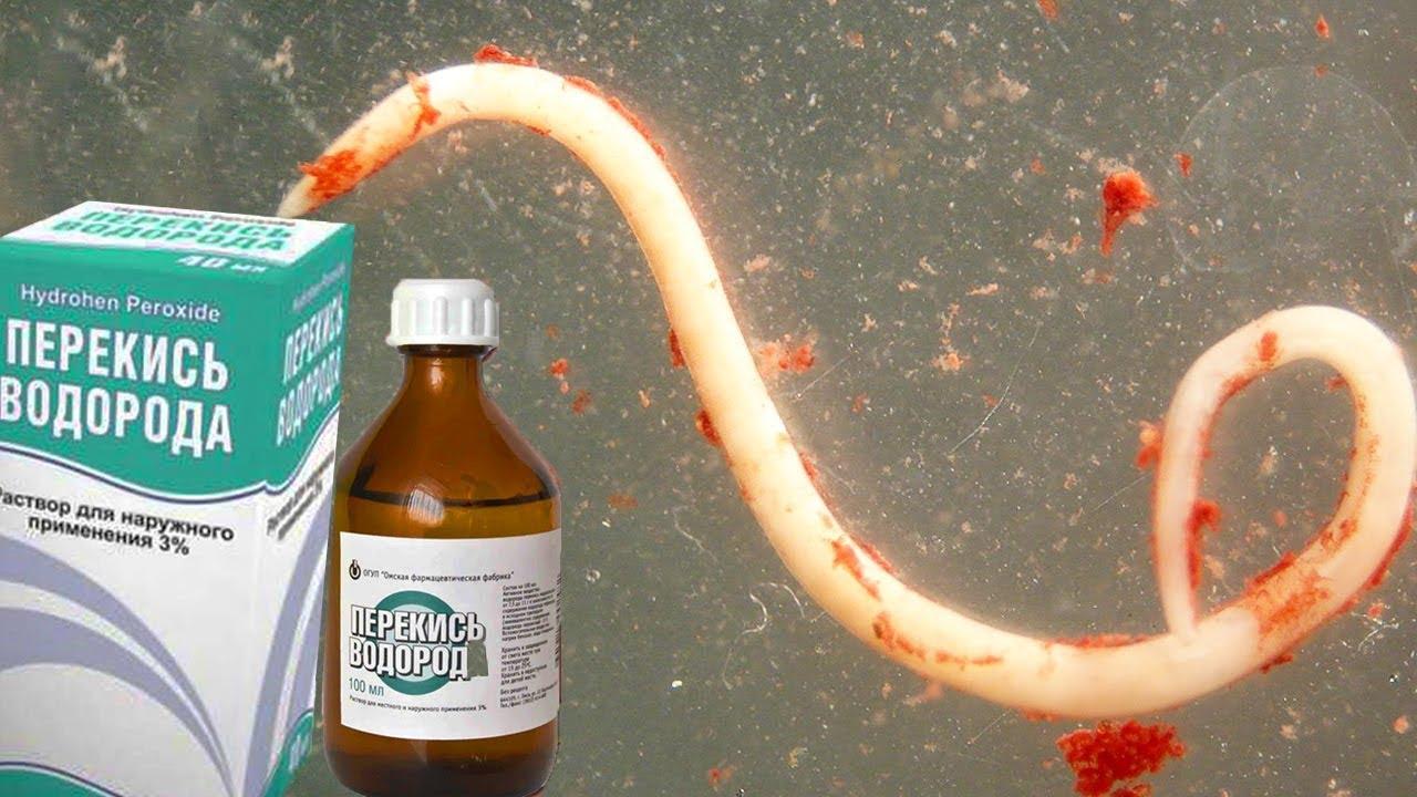 чистка организма от паразитов травами