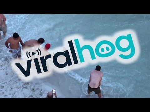 Swimmers Shocked By Huge Hammerhead Shark || ViralHog