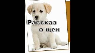 """Детские Христианские рассказы """"Рассказ о щенке""""."""