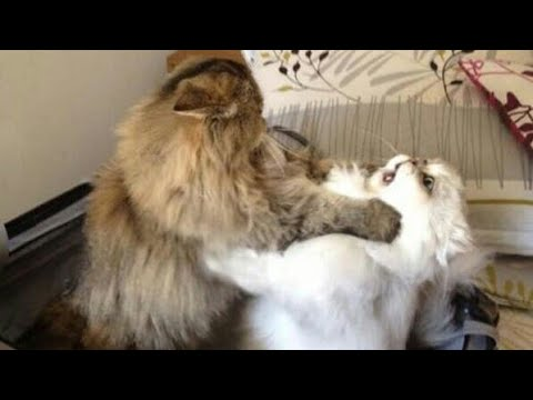 You will NEVER WIN THIS TRY NOT TO LAUGH CHALLENGE - Funny ANIMAL compilation