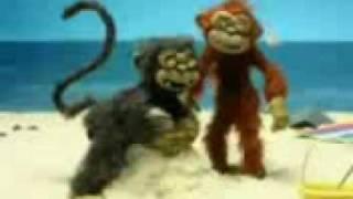 Riebalų beždžionių svorio metimas