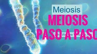 meiosis paso a paso