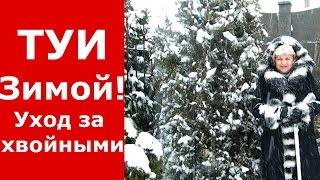 Туи, хвойные зимой. ПОЛЕЗНЫЙ СОВЕТ!!! Уход за туями, елями, хвойными зимой в снежную погоду!!!(Зима в самом разгаре! Обильные снегопады накрывают наши сады, растения, деревья, туи и хвойные. Красота незе..., 2016-01-20T09:00:00.000Z)