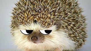 PAHAN ONNEN SIILI | Pelataan The MisAdventures Of Spiky
