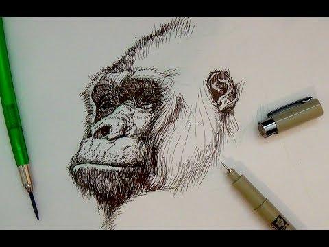Pen & Ink Drawing Tutorials | Realistic gorilla portrait