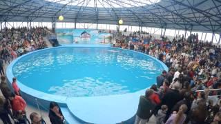 Открытие дельфинария в Сочи Парке(, 2015-05-05T07:11:20.000Z)
