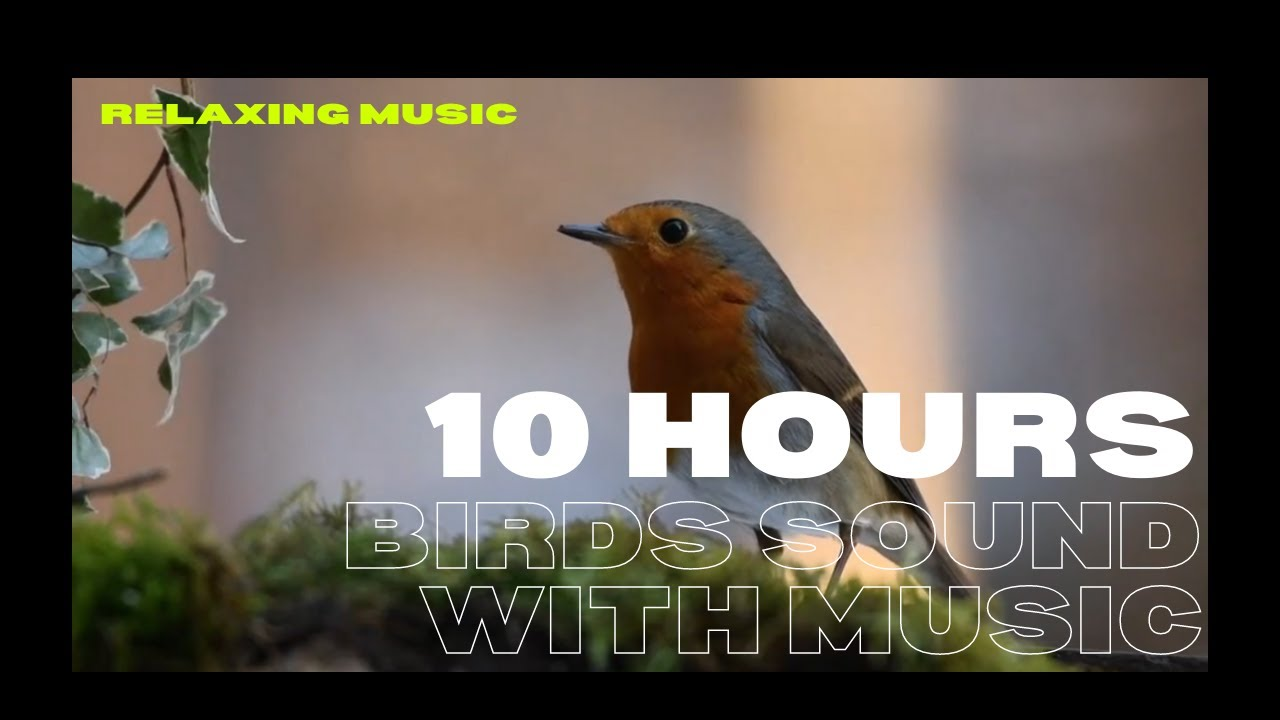10 Hours of Relaxing Morning Birds Singing In Tropical island