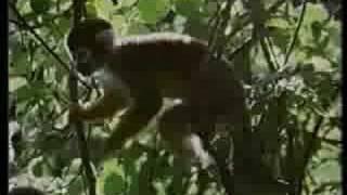 Yanomamo: The Monkey