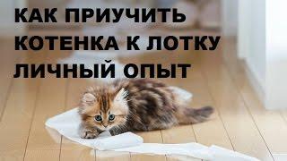 Как приучить котенка к лотку Личный опыт