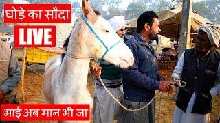 तीस हजार का घोडा बिका पंद्रह हजार में   Jagraon Horse Mela Part 6