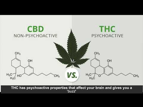 Medical Marijuana | Sofea Johanif