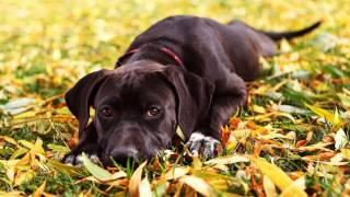 Как узнать породу своей собаки?