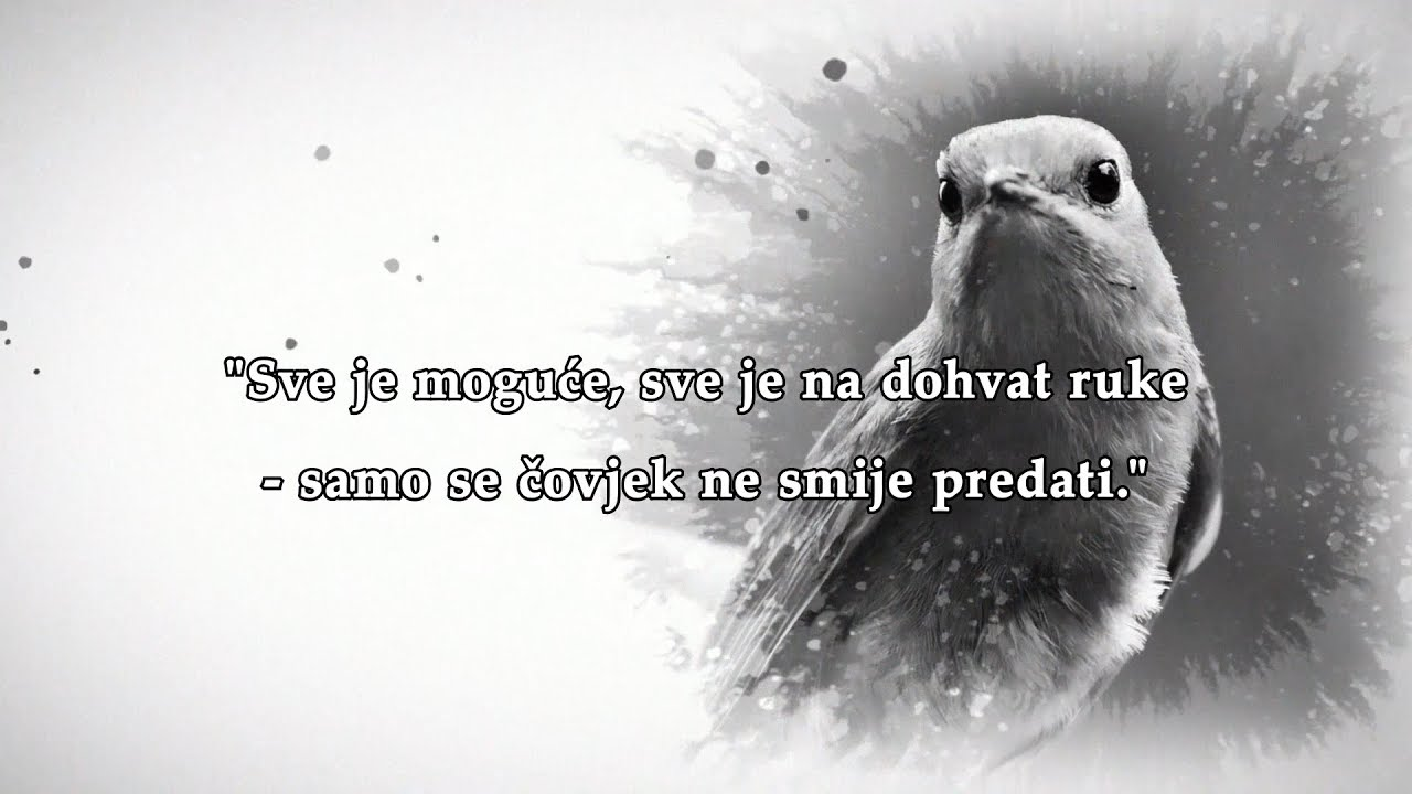 Najljepsi Citati Mesa Selimovic