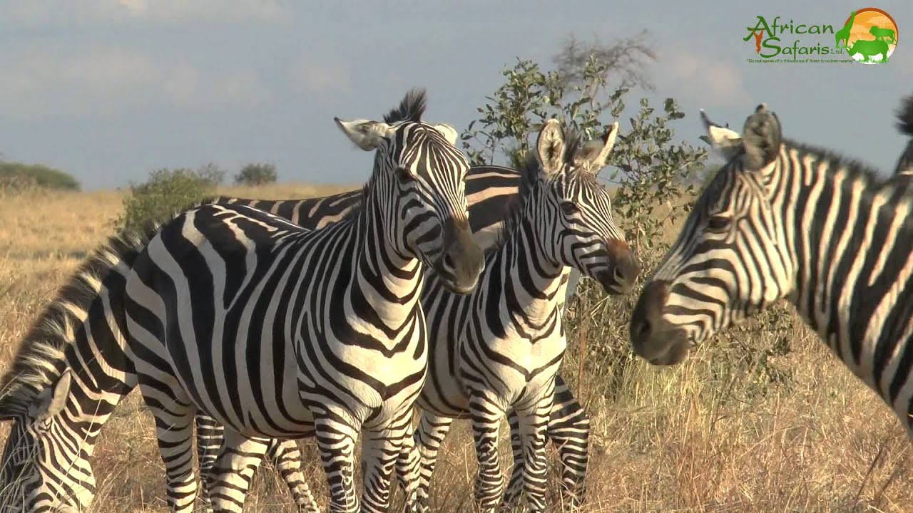 Image result for african safari 2015 photos free