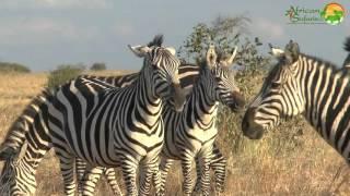 19-day Kenya and Tanzania African Wildlife Safari (2015)