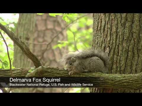 Wildlife Biologist - Career Spotlight