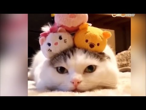 I'm dying! CUTE KITTENS PLAYING [Kitty Cat Videos]