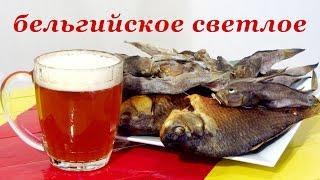 Рецепт домашнего пива - бельгийское светлое