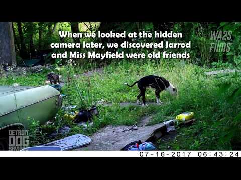 Puppy Rescue Update Miss Mayfield & Other Stray Dogs! Hope For Dogs Like My DoDo