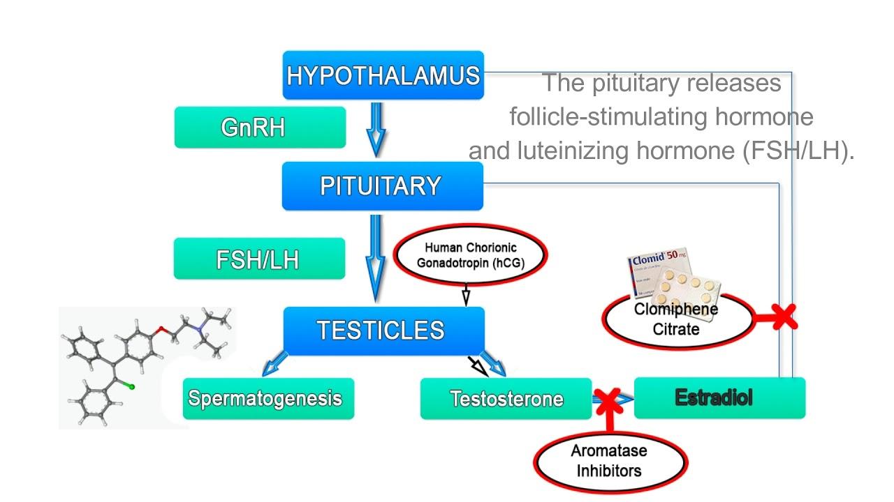 ciprofloxacin hydrochloride physicochemical properties