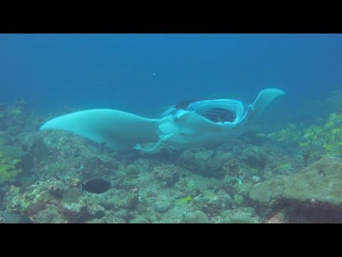 Compare the diving in the Raa Atoll with snorkelling at Meedhupparu