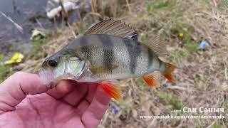 В поисках весеннего окуня . Рыбалка на микроджиг