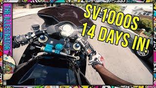 Suzuki SV1000 First impressions