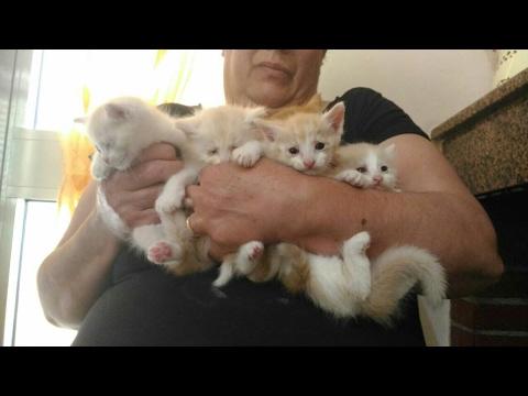 Dolcissimi cuccioli di gattini