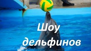 Batumi Dolphinarium. Дельфинарий Батуми.Шоу с дельфинами. ბათუმის დელფინარიუმი